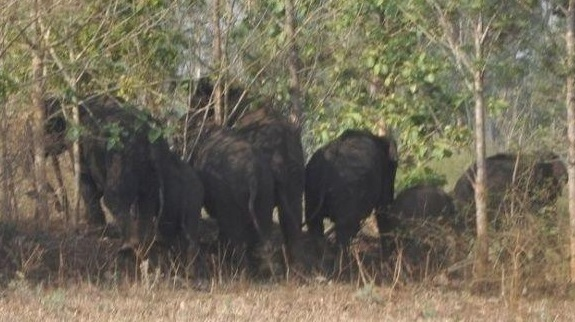 Tuskers trample 3 villagers to death, leave 5 injured